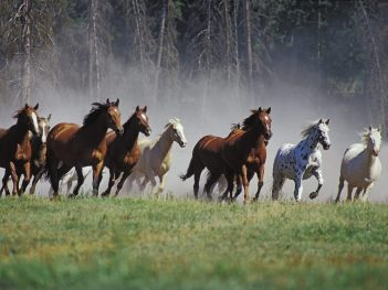 Animals_Horses_Horses_running_014323_