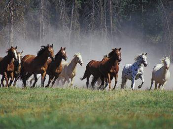 Animals_Horses_Horses_running_014323_