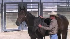 teaching-lateral-flexion-to-an-o-320x180
